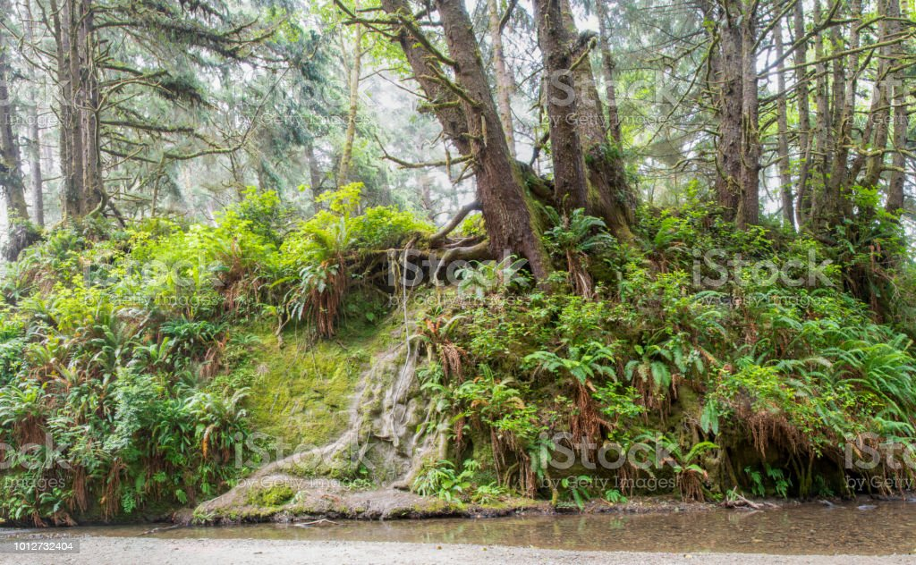 Fern Canyon, Prairie Creek Redwoods State Park, California stock photo