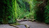 Northwest California's Redwood National Park.\nJed Smith Redwoods State Park.\nFern Canyon Trail.