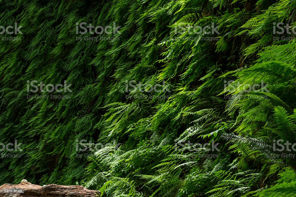 Fern Canyon, Redwood National Park stock photo
