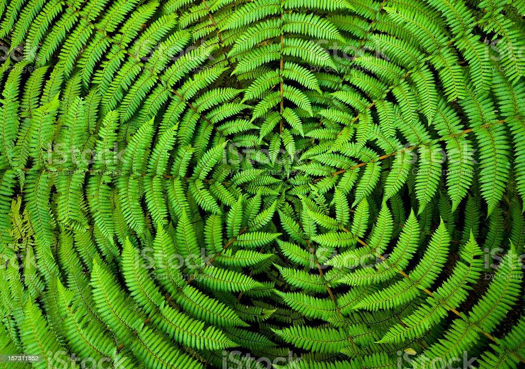 Fern Circle Background royalty-free stock photo