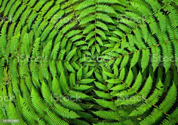 Photo of Fern Circle Background