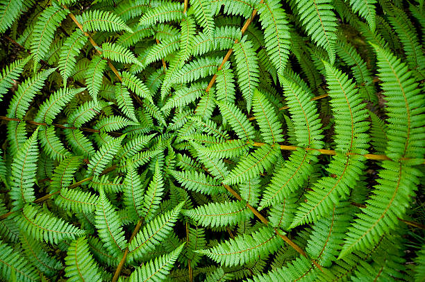 fern circle - animal markings stock pictures, royalty-free photos & images