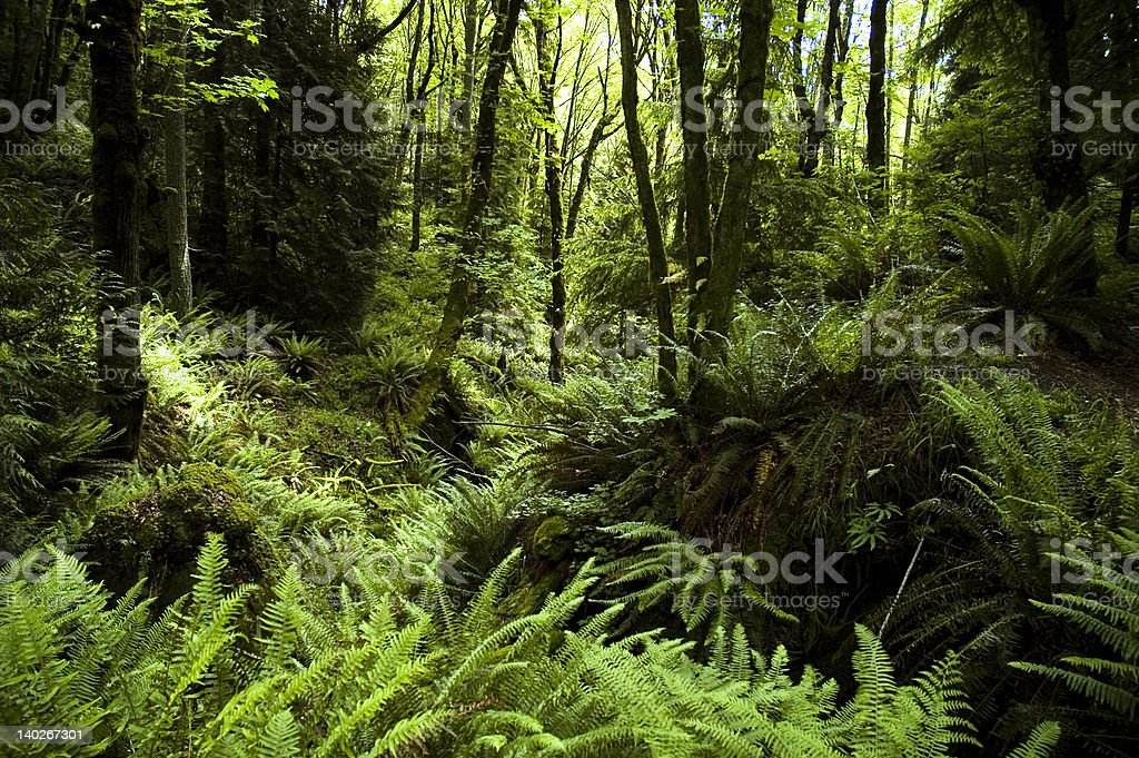 Fern Filled Forest royalty-free stock photo