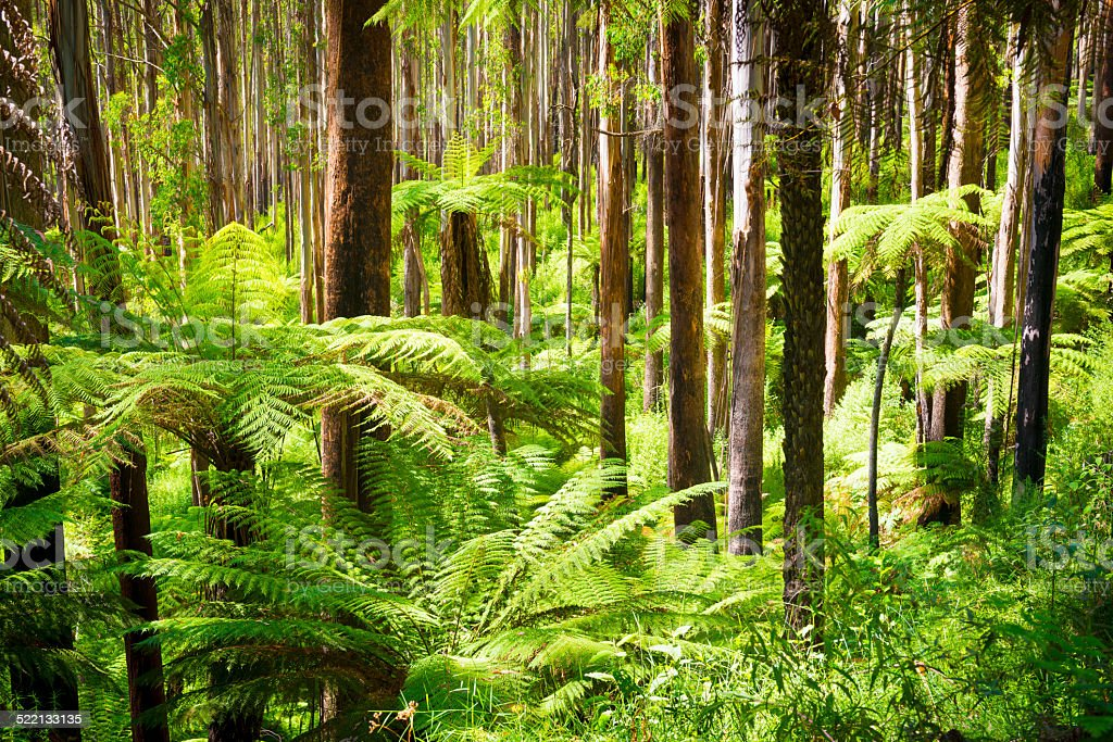 Fern Forest stock photo