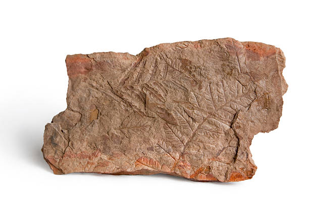 Red Shale Stone : Royalty free shale rock pictures images and stock photos
