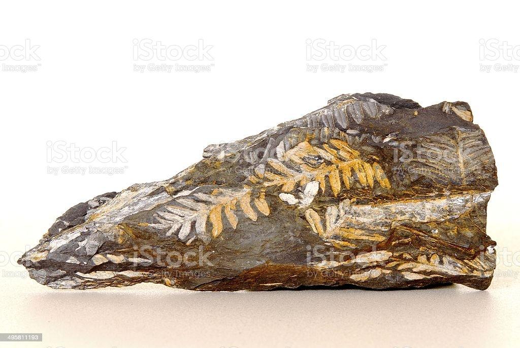 Fern Fossil stock photo