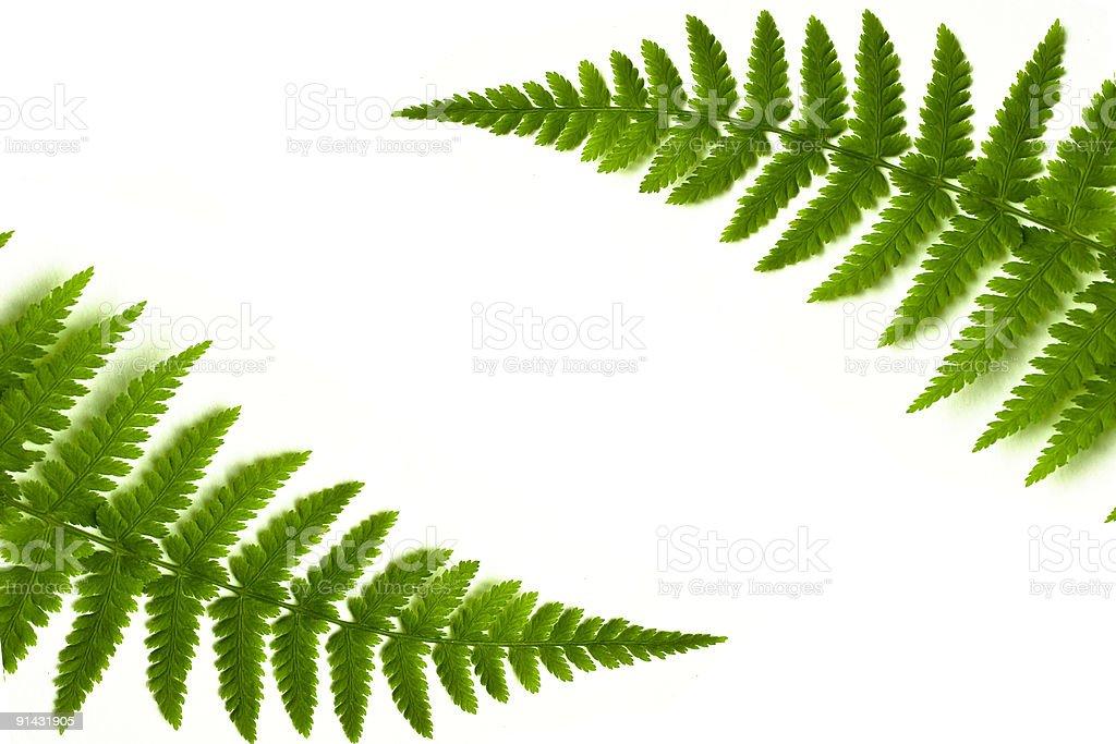 fern frame royalty-free stock photo