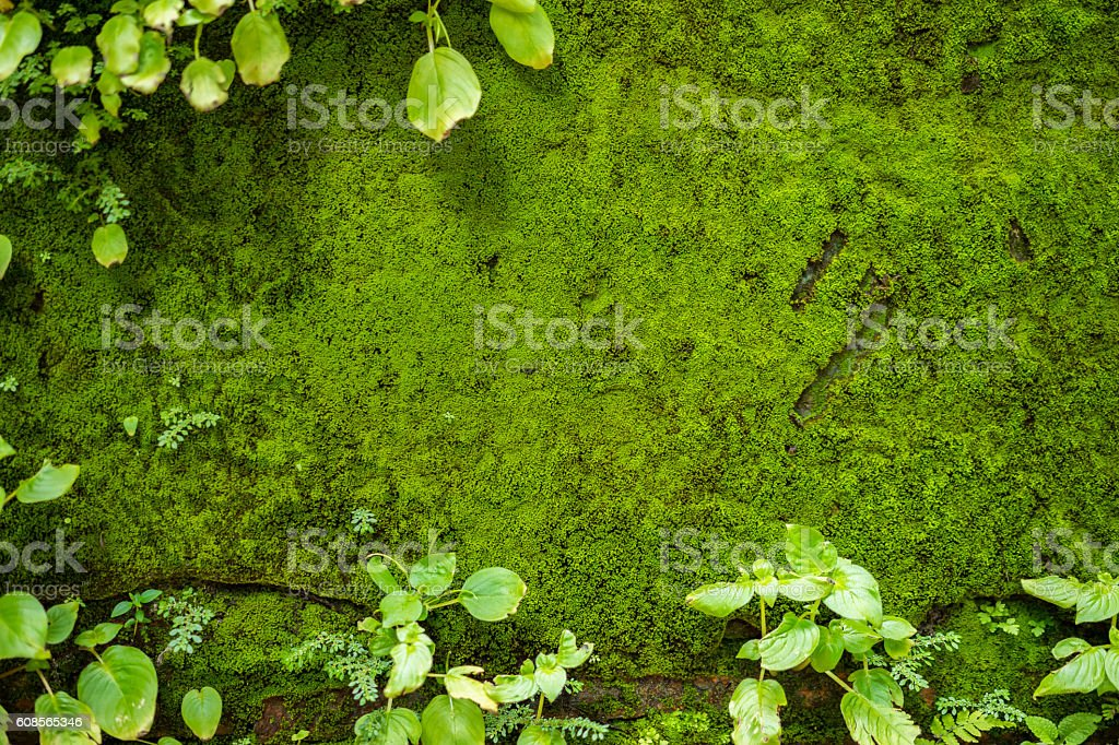 Fern frame with moss on wall background. stock photo