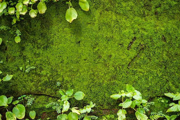 fern frame with moss on wall background. - moss stock pictures, royalty-free photos & images