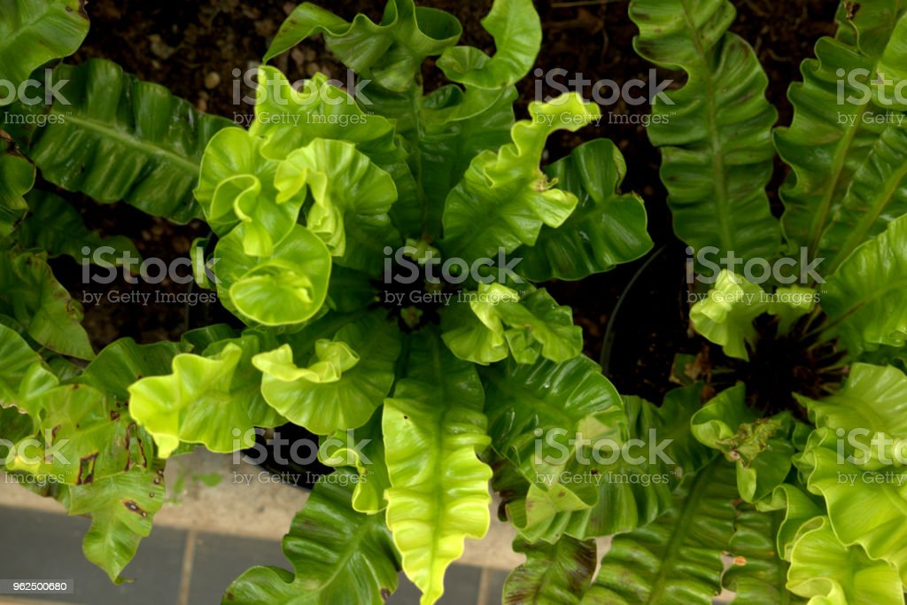 Fern from above - Royalty-free Beauty In Nature Stock Photo
