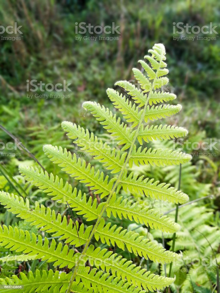 A fern Frond royalty-free 스톡 사진