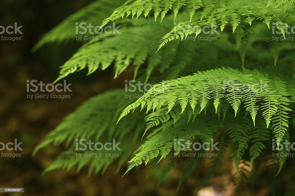 Fern fronds stock photo