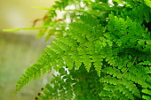 Plant,  Backgrounds, Fern, Beauty In Nature