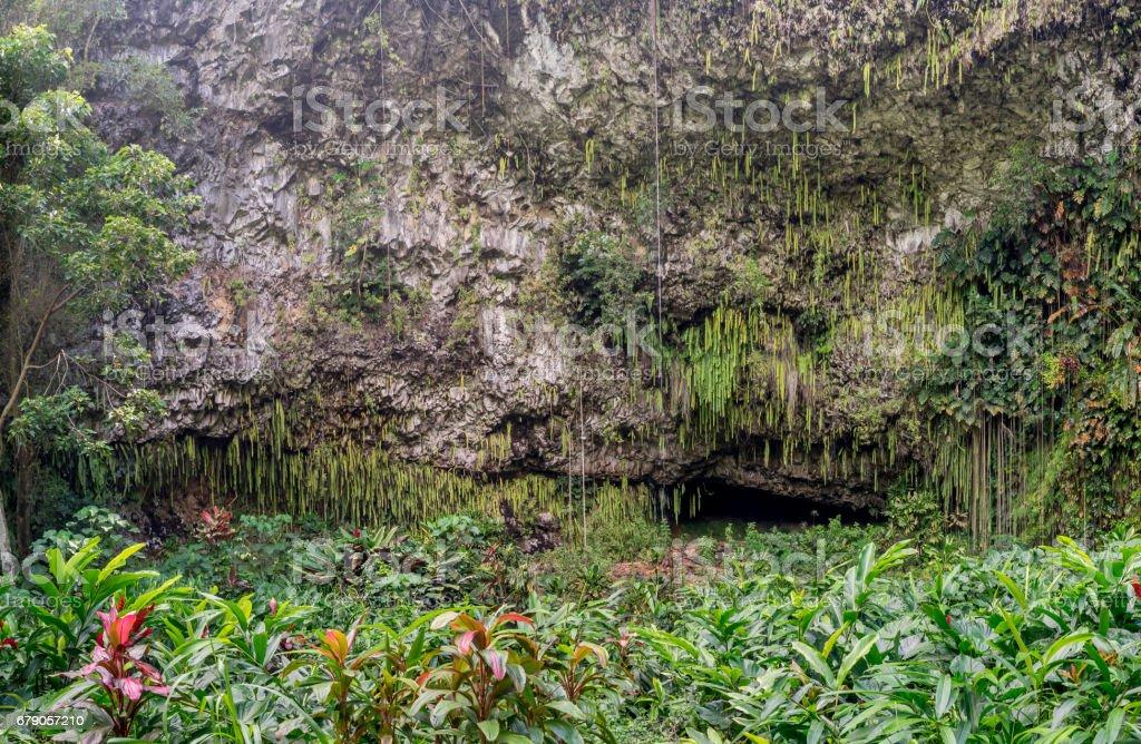 Fern Grotto, Kauai stock photo