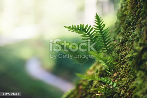 Spring background with fresh green fern leaves growing from the tree.