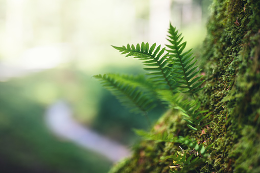 Fern Growing From The Tree