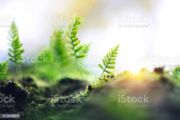 Photo of Fern Growing From The Tree