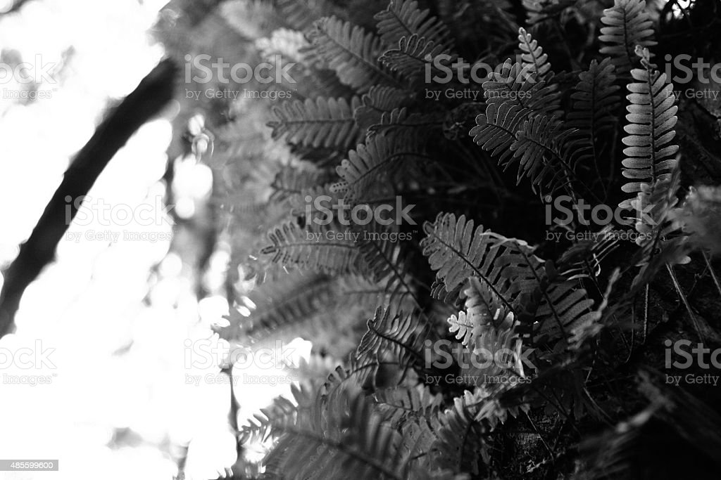 Fern growing in a tree with daylight behind stock photo