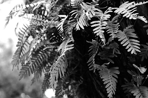 Fern growing in a tree with natural light stock photo