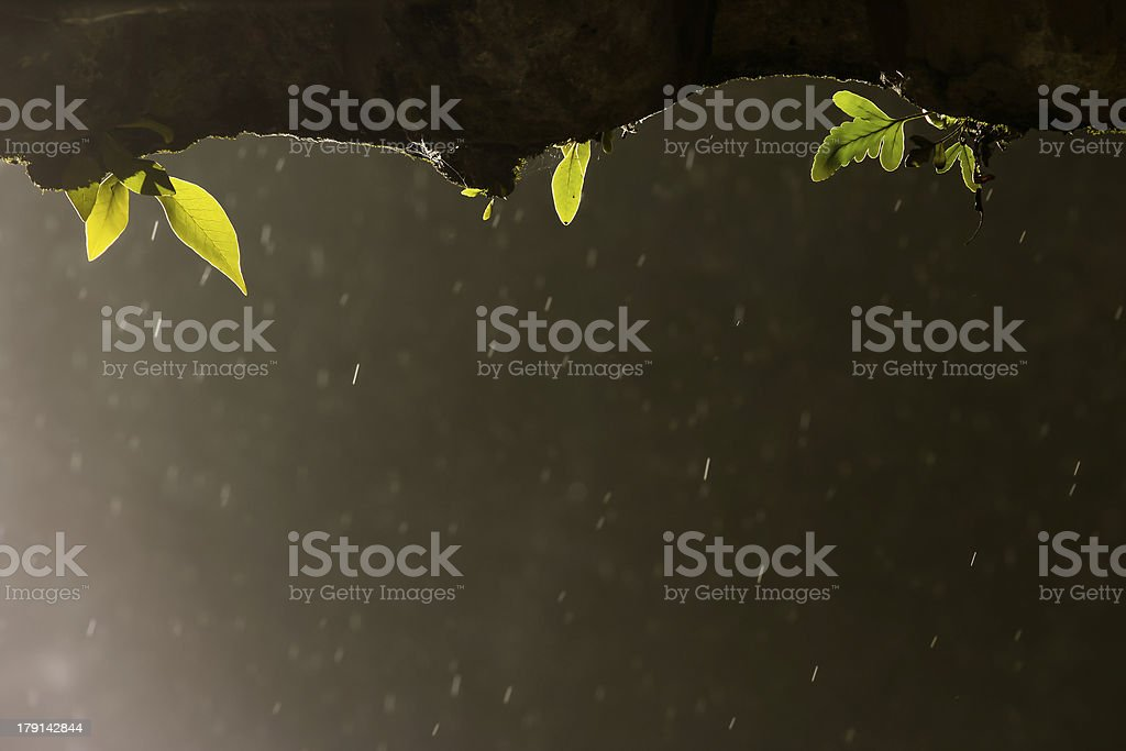 fern growing on dirty roof tile with rain drop background royalty-free stock photo