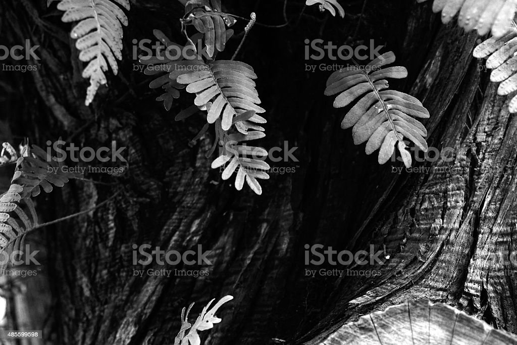 Fern growing on the side of a tree stock photo