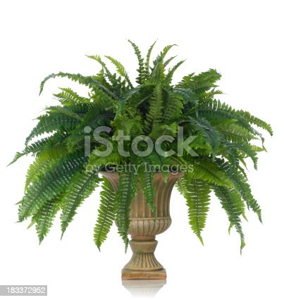 A luxurious fern plant in a classic fluted urn. Shot against a bright white background. There is a path which may be used to delete the reflection if desired. Extremely high quality faux flowers