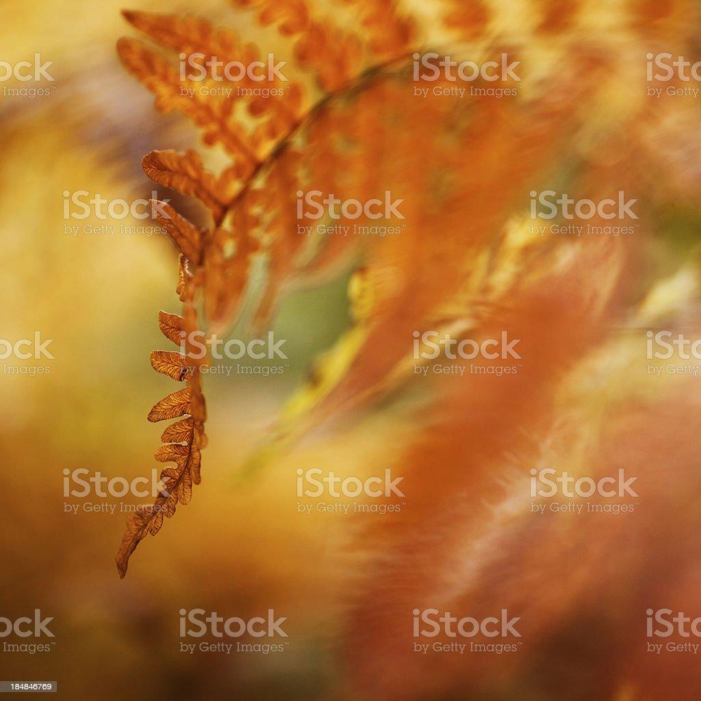 Fern in autumn stock photo