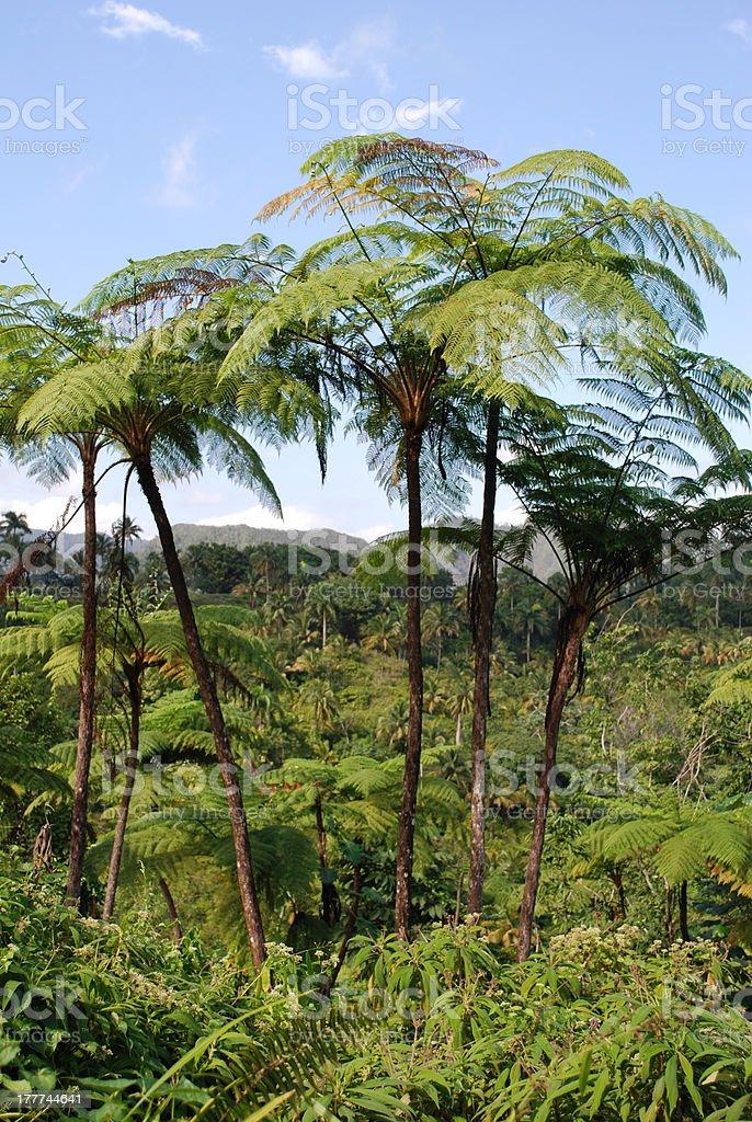 fern in Baracoa, Cuba stock photo