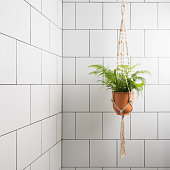 Indoor bathroom wall featuring a potted fern hanging in a Macrame basket.