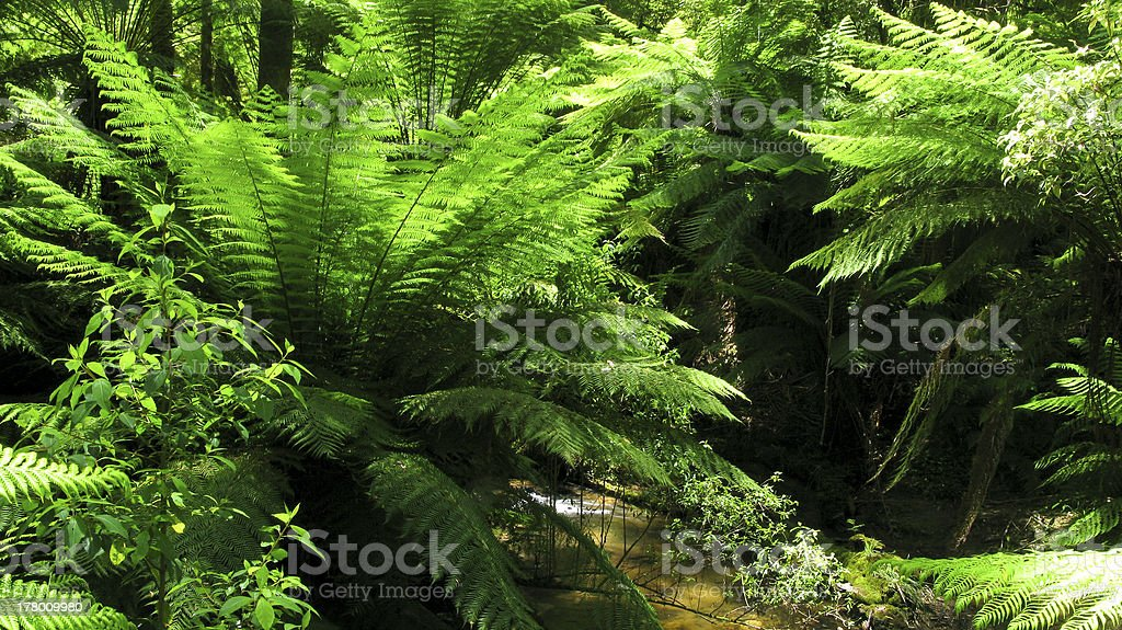fern in rain forest royalty-free stock photo