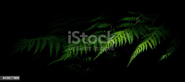 fern frond sticking out in natural light