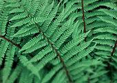 Fern in tropical rain forest
