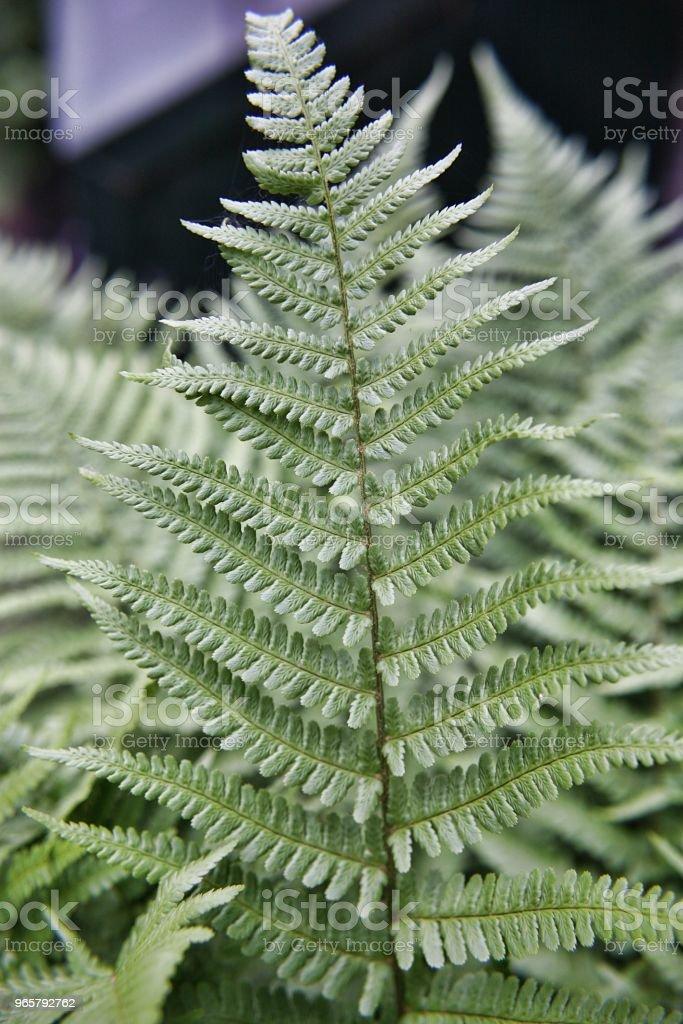 Fern leaf green Green fern leaf close up Backgrounds Stock Photo