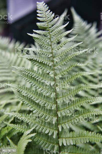 Fern Leaf Green Stock Photo - Download Image Now