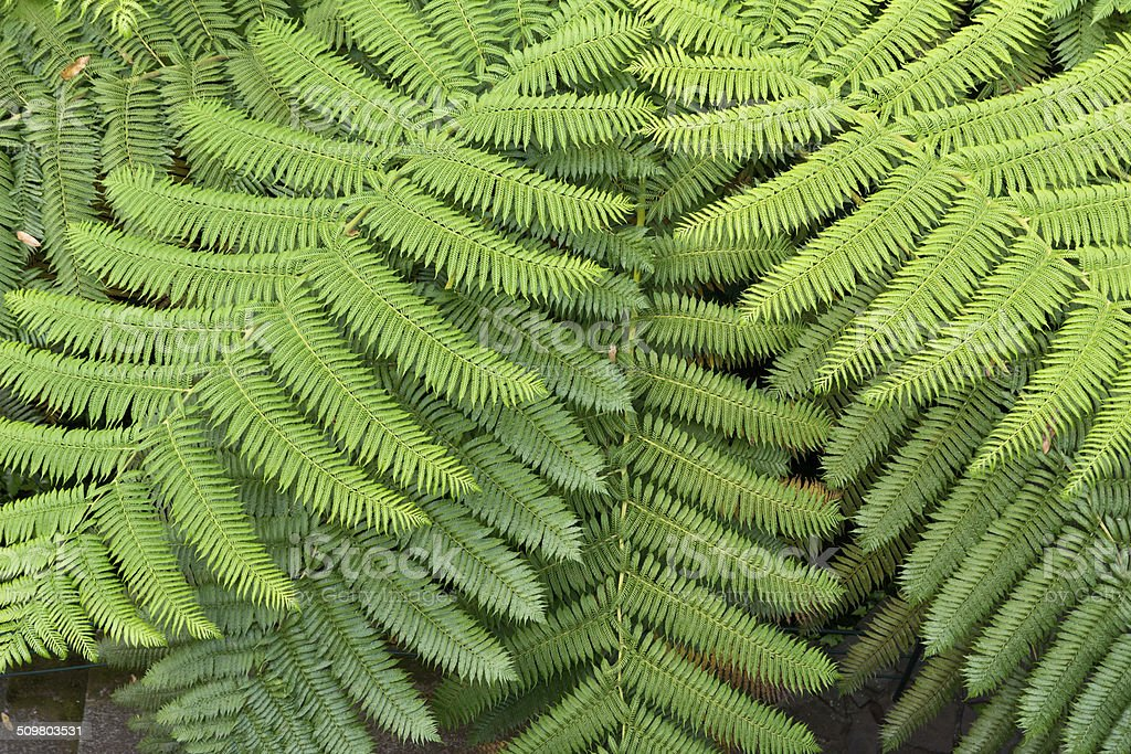 Fern leaf in detail stock photo
