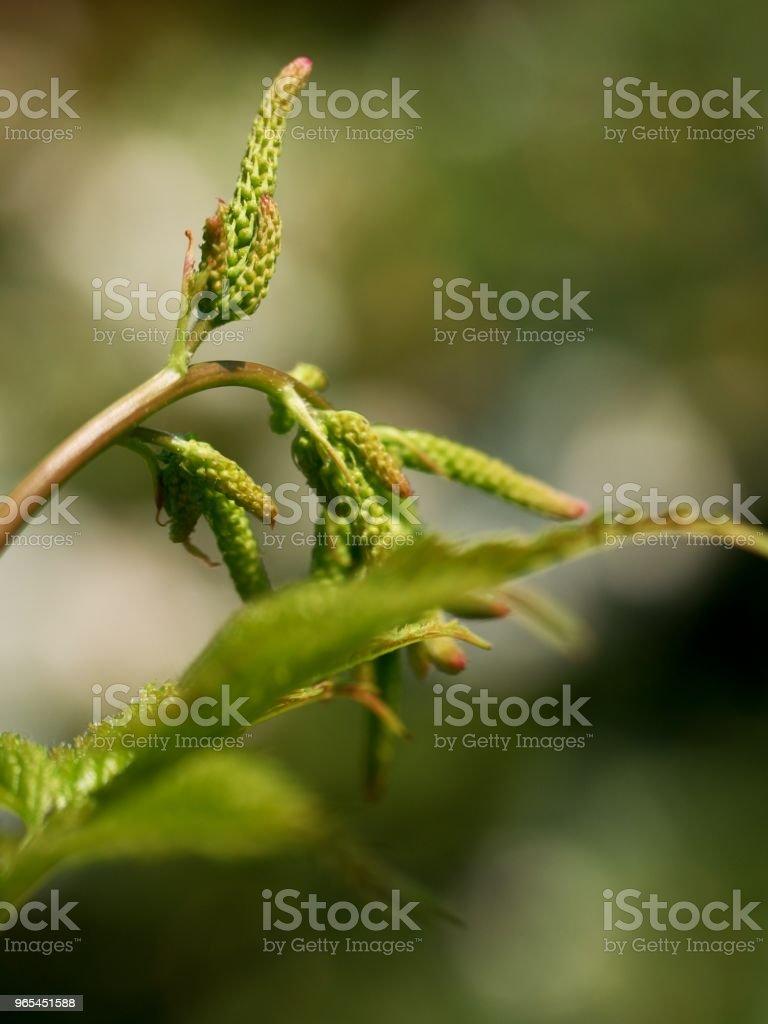 Fern leaf in forest in detail in bright sun.  Crowded green fresh fern zbiór zdjęć royalty-free