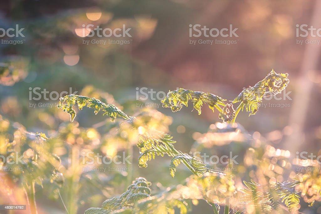 fern leaf in morning sunshine stock photo