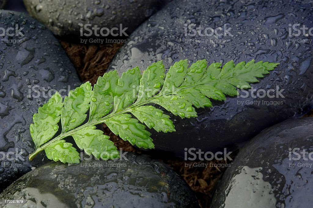 Fern Leaf royalty-free stock photo