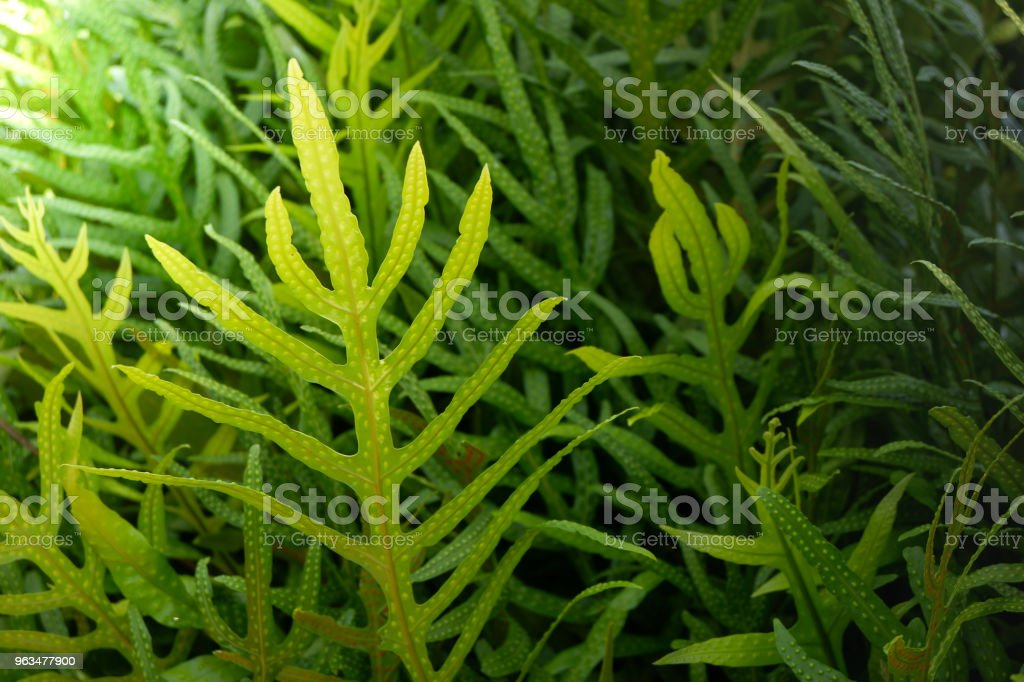 Fern leafs pattern for background. stock photo