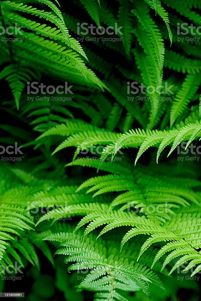 fern leafs stock photo