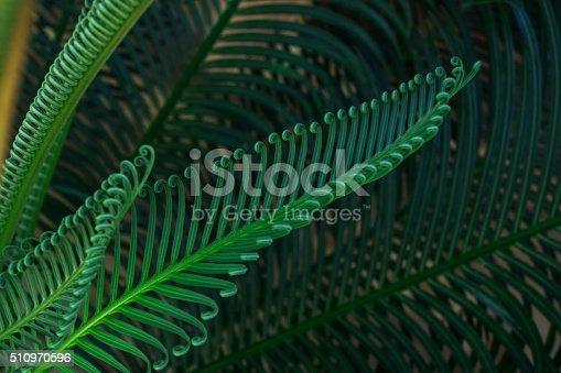 Shrubs fern. Background