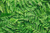 Top View of fern background