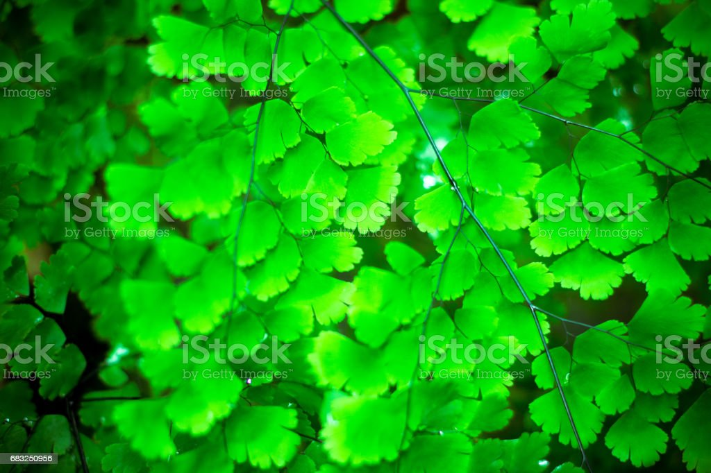 Fern Leaves Background foto de stock royalty-free
