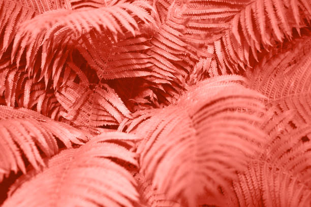 Fern leaves foliage as floral background. Color of the year 2019. Fern leaves foliage as floral background. Selective focus. Color of the year 2019. coral colored stock pictures, royalty-free photos & images