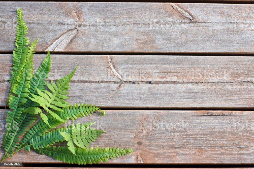 Feuilles de fougère dans le coin inférieur gauche sur un fond en bois - Photo