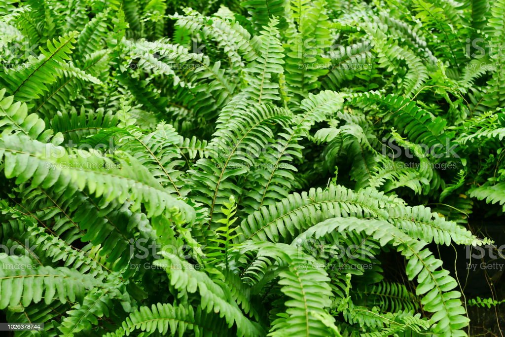 Fern leaves in the sunlight stock photo