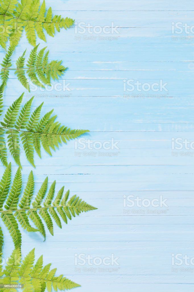 fern leaves on blue wooden background zbiór zdjęć royalty-free