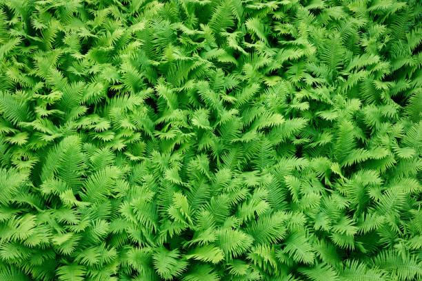 Fern leaves pattern background stock photo