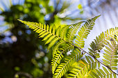 Fern Leaves