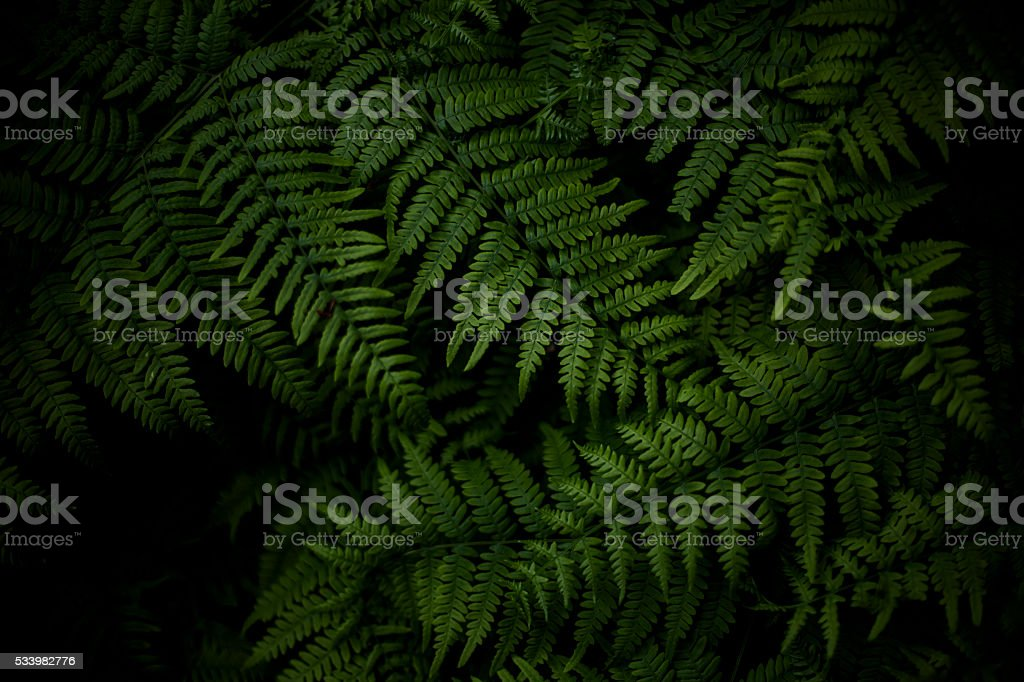 Fern leaves shot from above stock photo